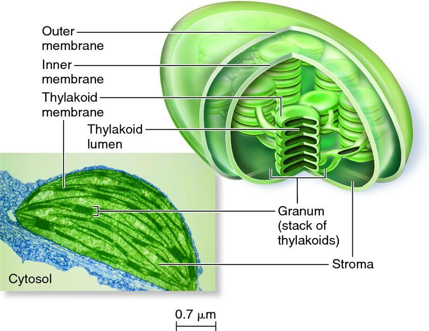 Online Biology Tutors  Biology Homework Help  Tutorcom