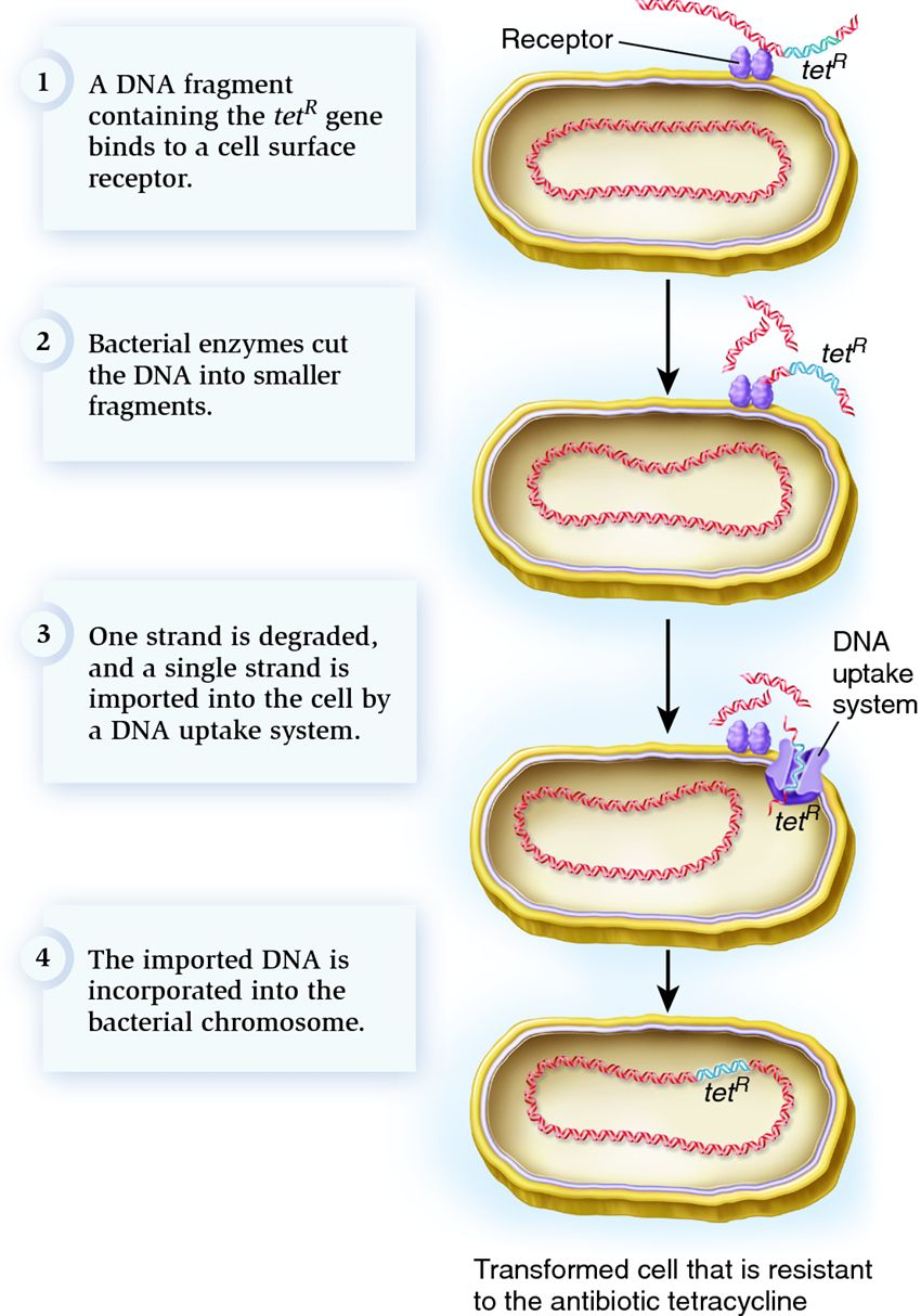 how to find gene id
