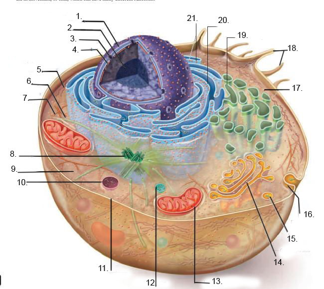 Animal Cell Diagram To Label