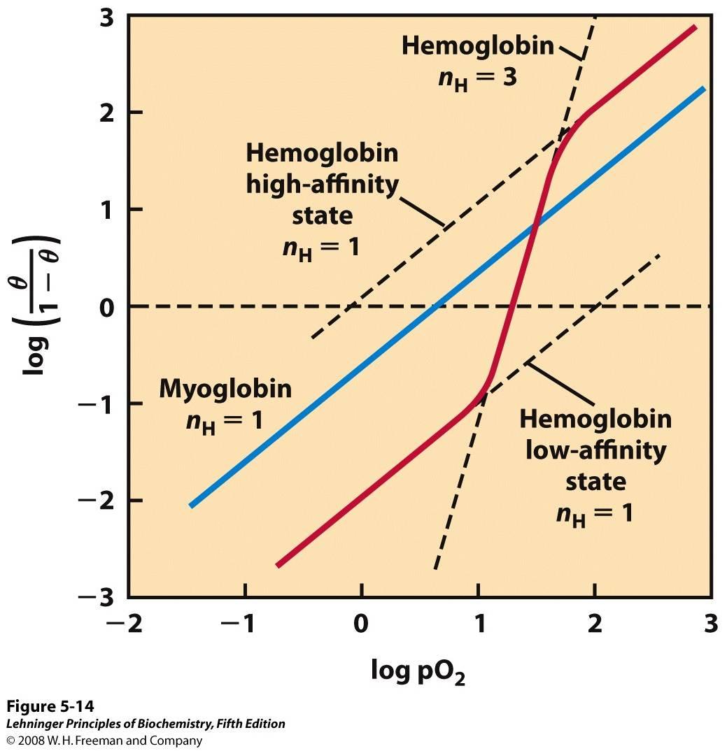 Hill Plots For Oxygen Binding To Myoglobin And Hemoglobin