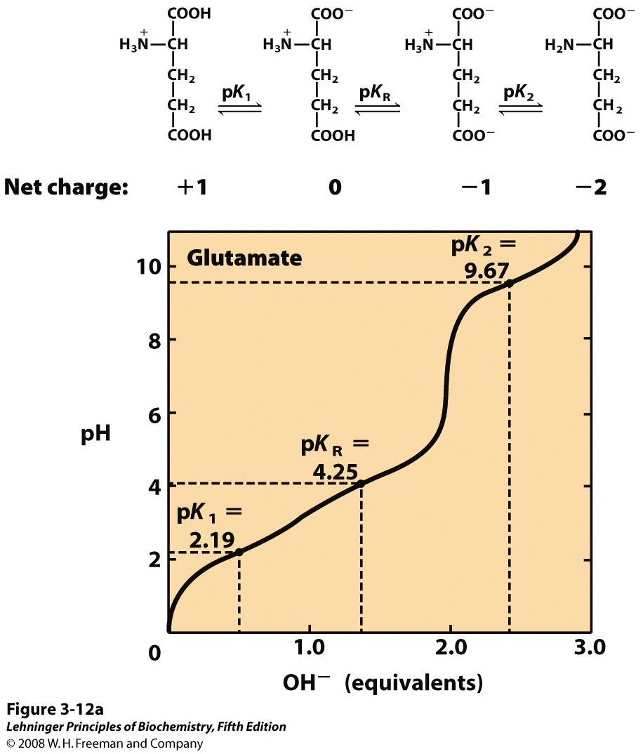 Titration curves for (a) glutamate and (b) histidine ... Arginine Titration Curve