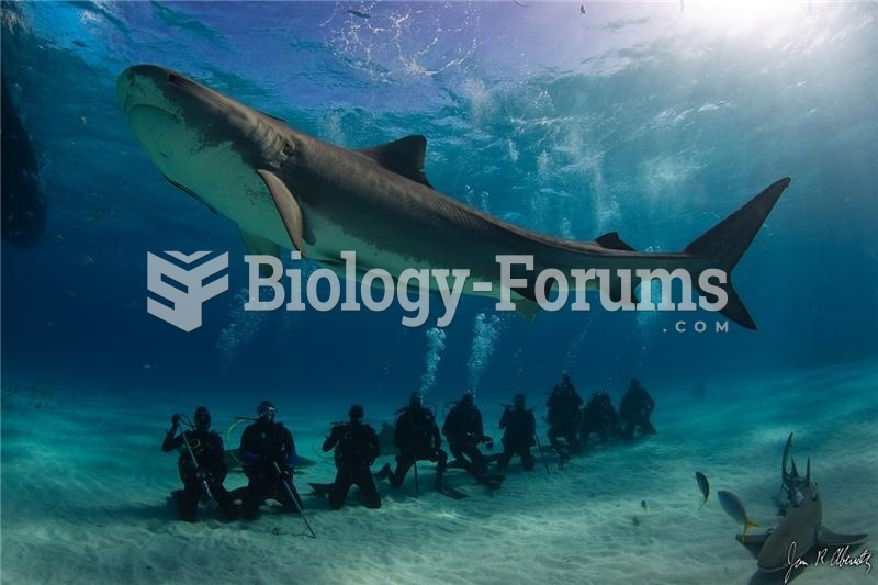 A large female tiger shark (Galeocerdo cuvier)