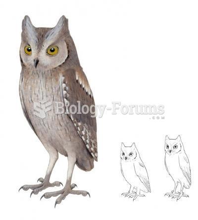 European scops owl and the extinct Otus mauli species from Madeira.