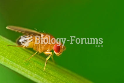 Male fruit fly (Drosophila Melanogaster) on a blade of grass.