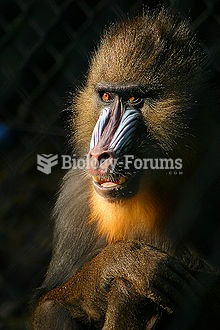 The mandrill (Mandrillus sphinx) is a primate of the Old World monkey (Cercopithecidae) family,[3] c