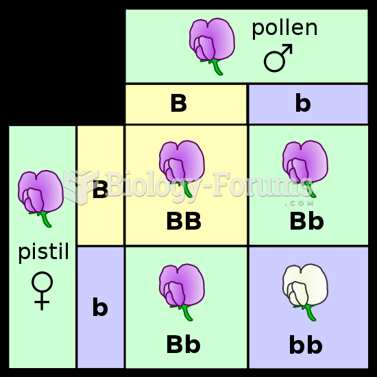 A Punnett square depicting a cross between two pea plants heterozygous for purple (B) and white (b)