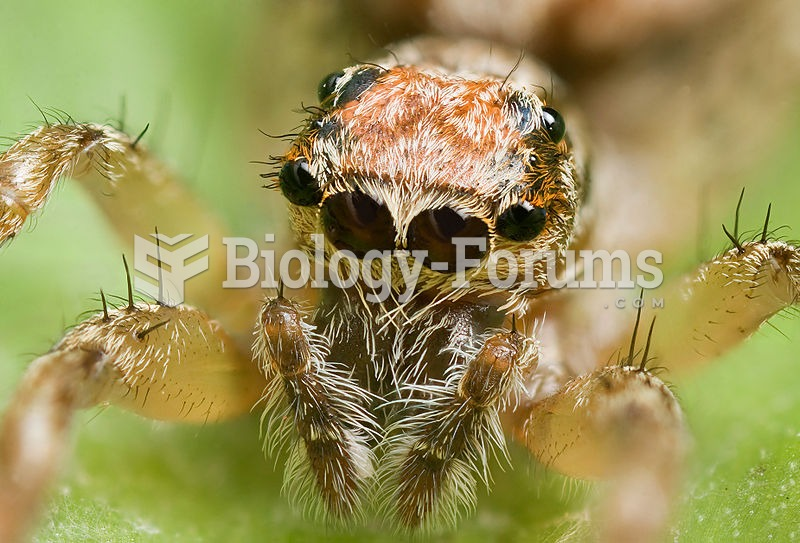 This jumping spider's main ocelli (center pair) are very acute.