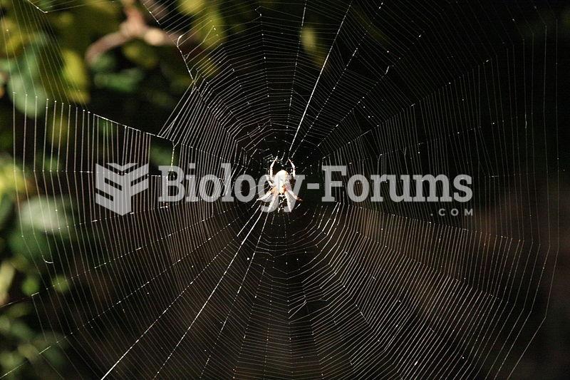 The large orb web of Araneus diadematus (European garden spider).