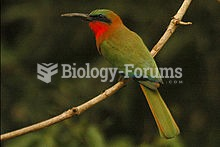 The Red-throated Bee-eater (Merops bullocki) is a species of bird in the Meropidae family.