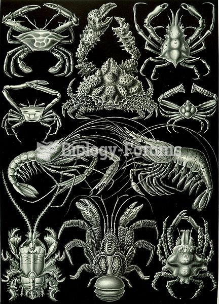 Decapods, from Ernst Haeckel's 1904 work Kunstformen der Natur