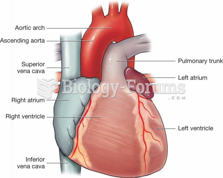 Surface of the heart.