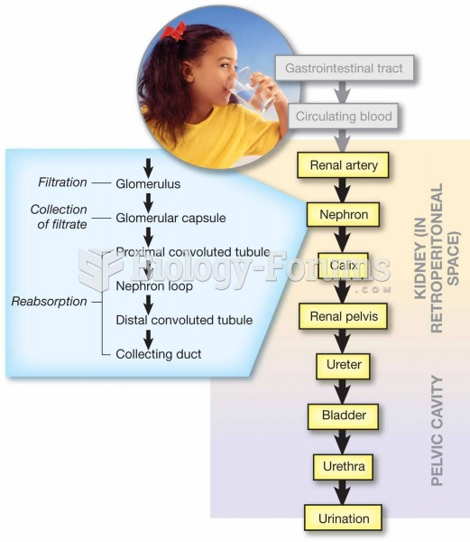 Pathway of urine production and elimination.