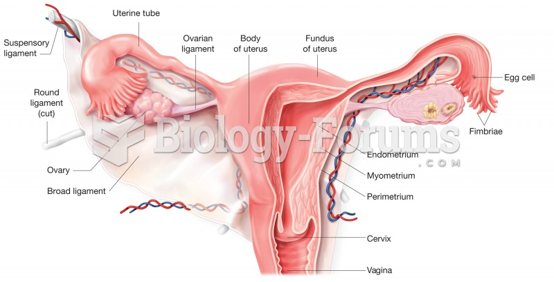 The uterus. Cutaway view shows regions of the uterus and cervix and its relationship to the uterine