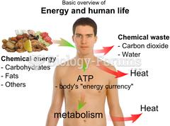 Basic energy of a human life