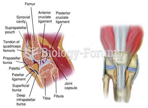 Anatomy of the Right Knee Joint, Sagittal Section