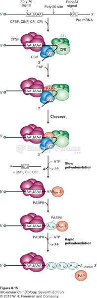 Model for cleavage and polyadenylation of pre-mRNAs in mammalian cells