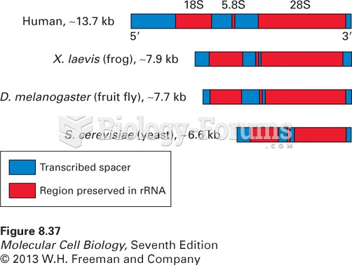 General structure of eukaryotic pre-rRNA transcription units