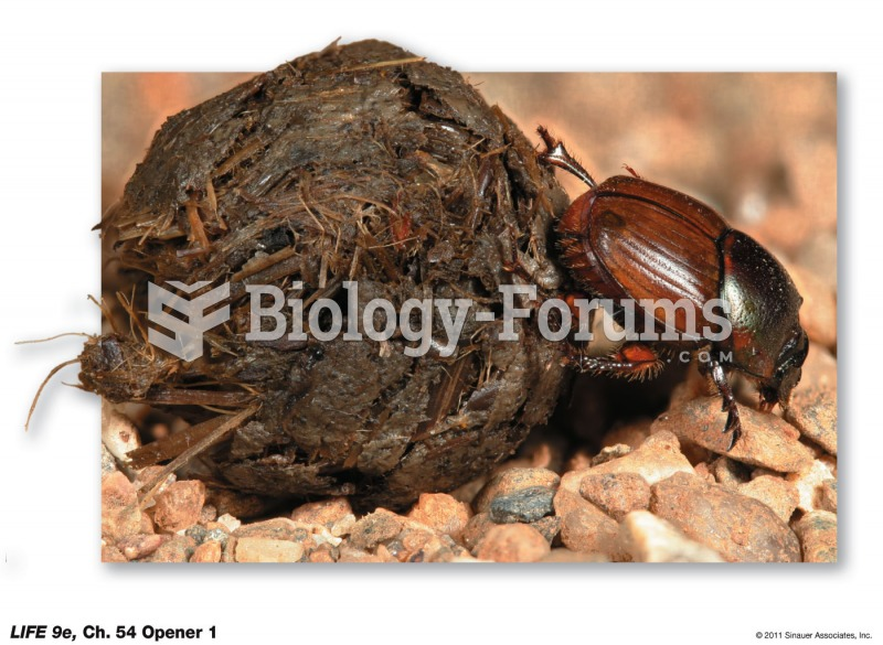 Onthophagus gazella in Australia