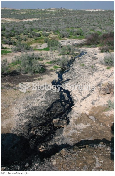 A Natural Oil Seep