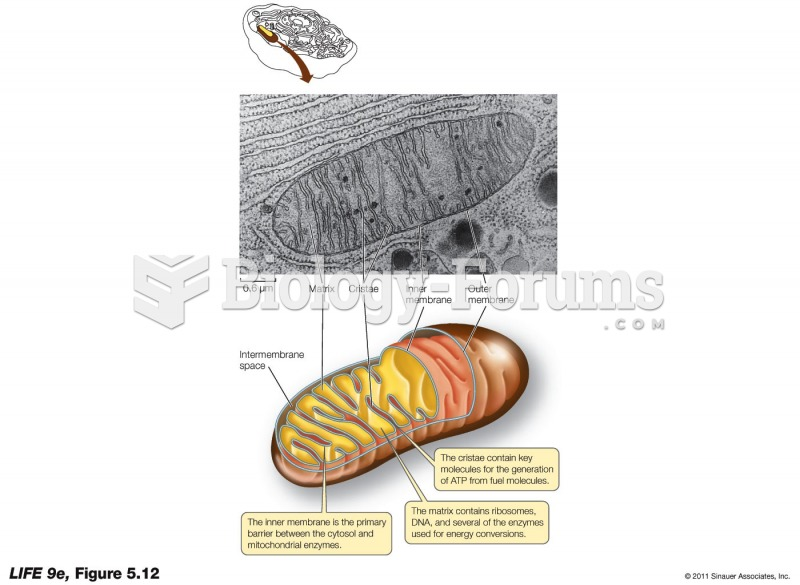 A Mitochondrion Converts Energy from Fuel Molecules into ATP