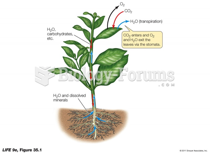 The Pathways of Water and Solutes in a Plant