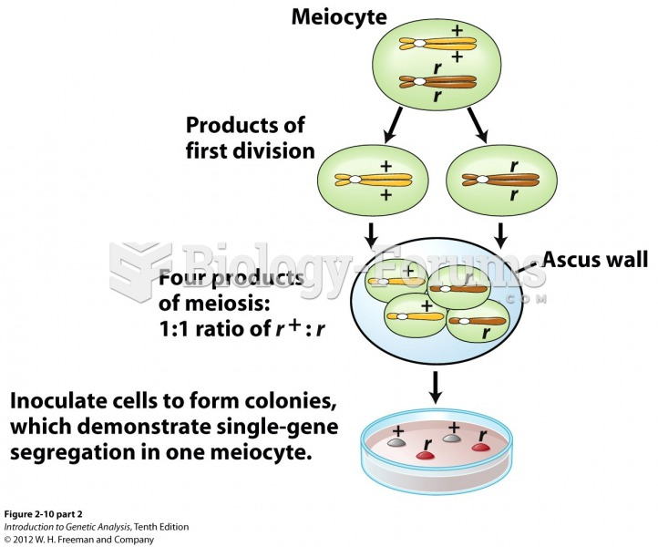 Demonstration of equal segregation within one meiocyte in the yeast S. cerevisiae