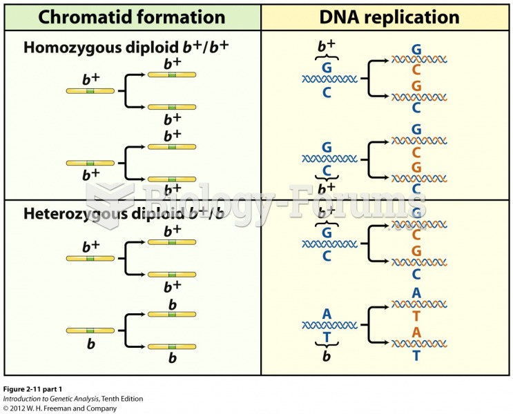DNA molecules replicate to form identical chromatids