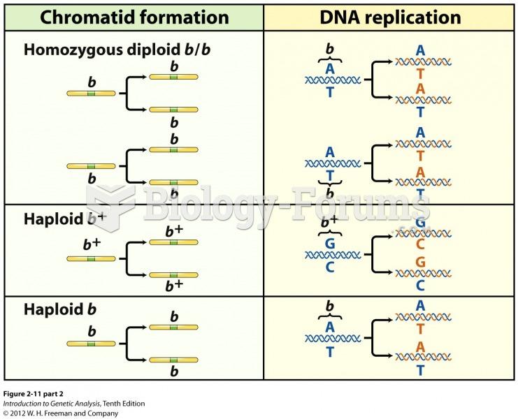 DNA molecules replicate to form identical chromatids