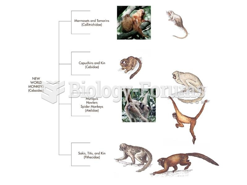 Example of a cladogram, or branching order, of the New World monkey Superfamily Ceboidea.