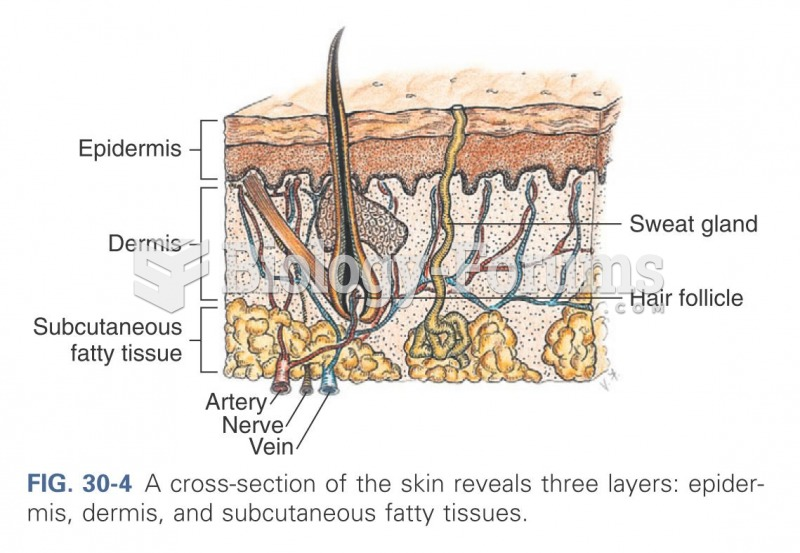 A cross-section of the skin reveals three layers