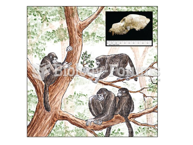 Aegyptopithecus may be ancestral to catarrhines and has full postorbital closure and two premolars.