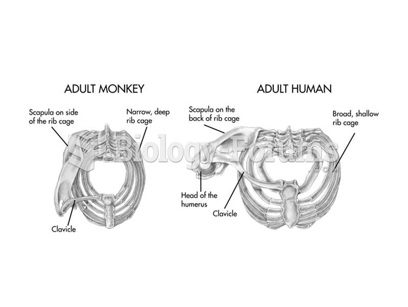 The thorax of apes, including humans, is broad but shallow in contrast to the narrower, deeper chest