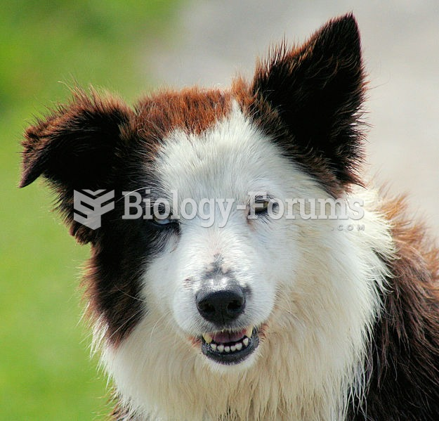 The Border Collie is considered to be one of the most intelligent breeds.