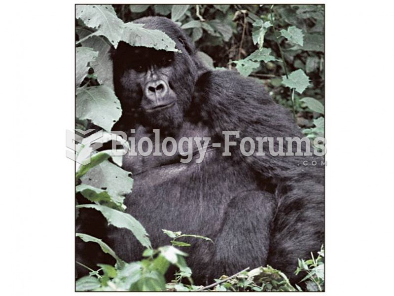Gorillas live in one-male or multimale groups, from which females emigrate at sexual materity.
