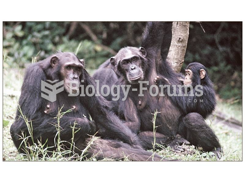 Chimpanzees live in complex kin groups in which lifelong bonds and individual personalities play key