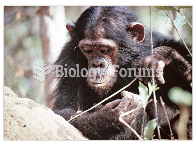 Wild chimpanzees make and use simple tools to obtain food, learning tool making from one another.
