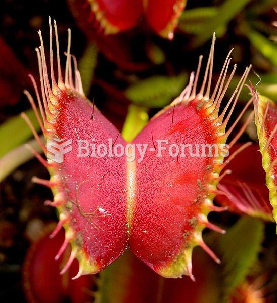 The Venus flytrap, a species of carnivorous plant.