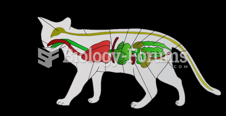 Diagram of the general anatomy of a male cat