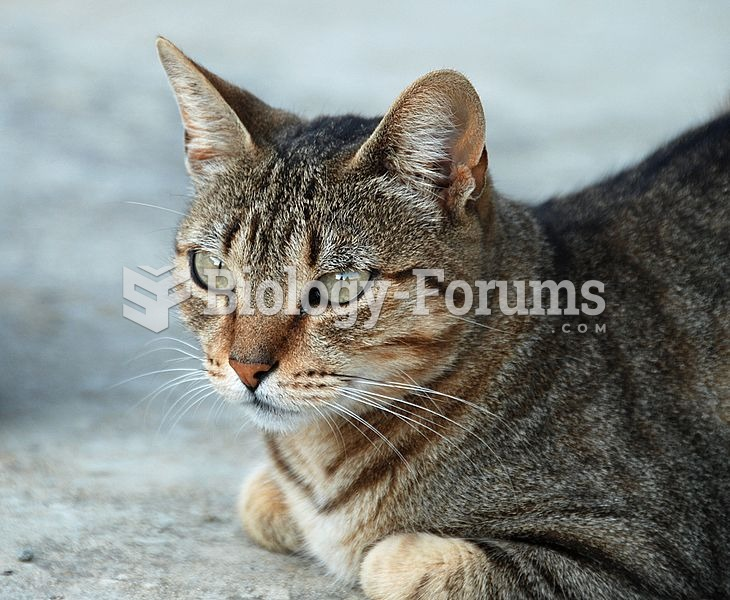 "Mackerel tabby, showing the characteristic ""M"" on its forehead."