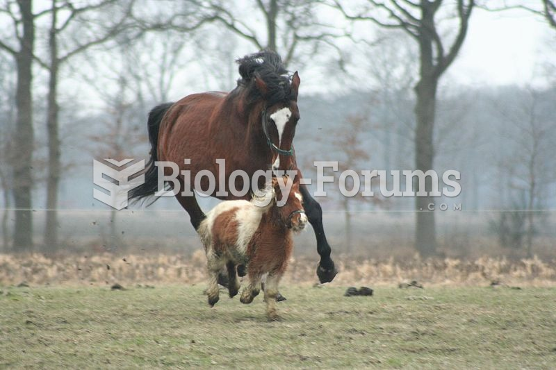 Size varies greatly among horse breeds, as with this full-sized horse and a miniature horse.