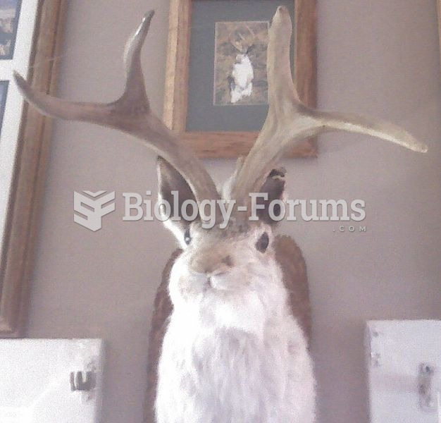Stuffed Jackalope in restaurant near Death Valley