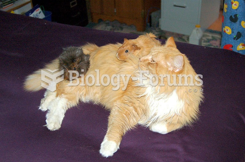 This cat has accepted this pair of guinea pigs.