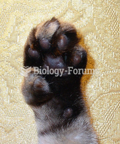 Male polydactyl grey house cat