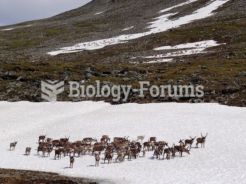 Reindeer standing on snow to avoid blood-sucking insects.