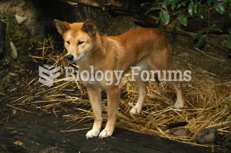 The Dingo was the first placental mammal introduced to Australia, around 4000 years ago