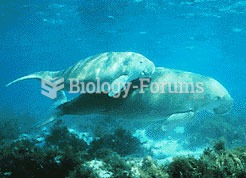 The Dugong is an endangered species; the largest remaining population is found in Australian waters