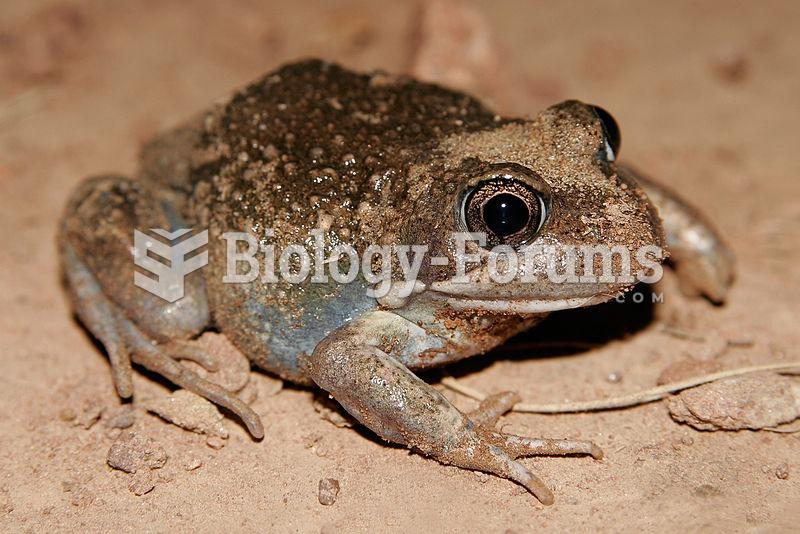 The Eastern Banjo Frog is a common frog species across eastern Australia.