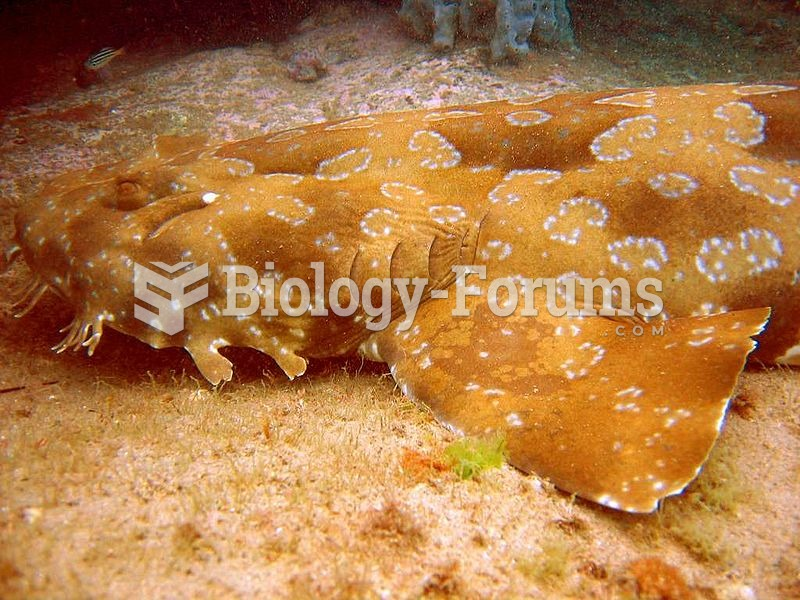 The spotted wobbegong is the largest wobbegong shark, reaching a length of around 3 m