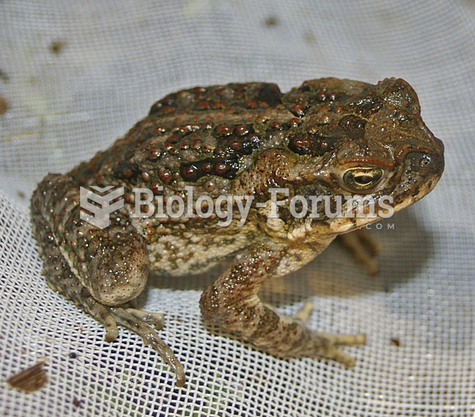 A young cane toad (Bufo marinus)