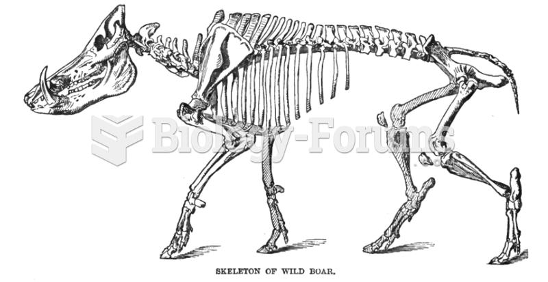 Wild boar skeleton